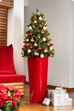 Kerstboom in LECHUZA plantenbakken