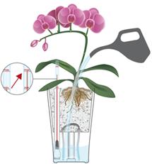 Orchideeën begieten in LECHUZA